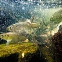 Panel Discussion: Biodiversity of the Chesapeake Bay