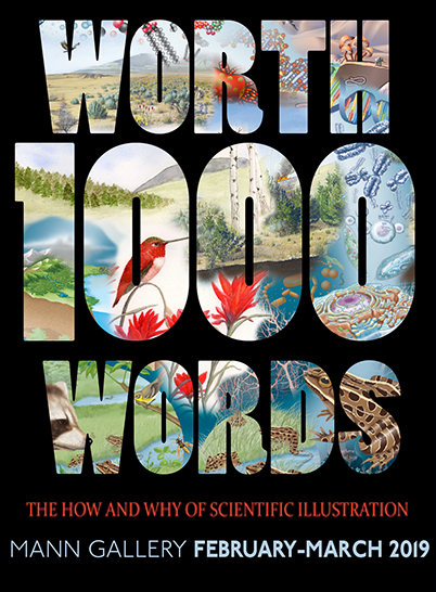 Exhibit opening: Worth a Thousand Words: The How and Why of Scientific Illustration