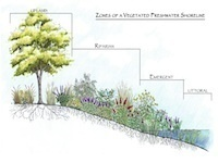 Stormwater Pond Problem Solving and Weed Control Clinic