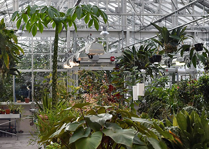Drawing in the Greenhouse: An Introduction to Sketching