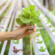 Austin Forum: Technology to Sustainably Grow More & Better Food