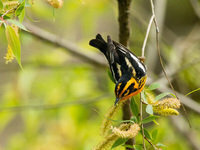 Birds and Blooms in Favored Places: A Photographer's Potpourri of the Finger Lakes