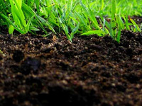 Making Soil Mixes with Compost