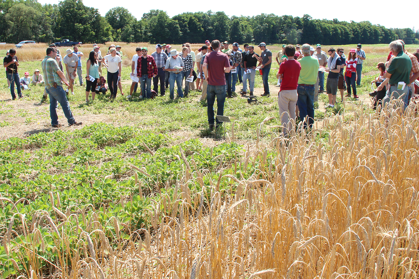 From No-till to New Cultivars: Improving Organic Corn and Soybean Production (in partnership with NOFA-NY)