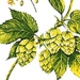 Hops Conference and Trade Show